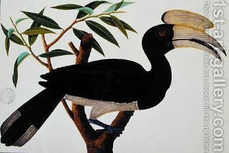 Ke-ke, from 'Drawings of Birds from Malacca', c.1805-18 (3) 2 by Anonymous Artist - Reproduction Oil Painting