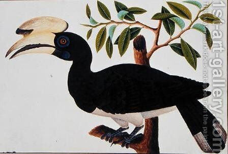 Ke-ke, from 'Drawings of Birds from Malacca', c.1805-18 (4) by Anonymous Artist - Reproduction Oil Painting