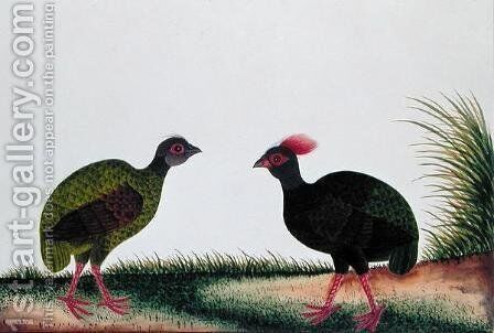 The Hen and the Cock, Sie-ole, from 'Drawings of Birds from Malacca', c.1805-18 by Anonymous Artist - Reproduction Oil Painting