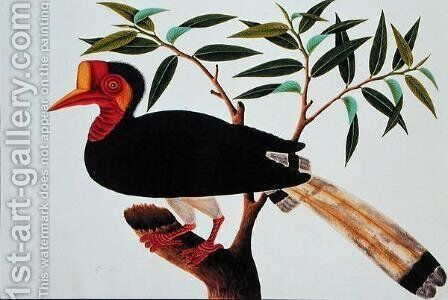 Jibang Aluntooa, from 'Drawings of Birds from Malacca', c.1805-18 by Anonymous Artist - Reproduction Oil Painting
