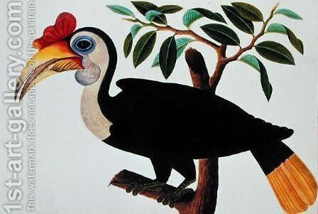 Ingang, from 'Drawings of Birds from Malacca', c.1805-18 by Anonymous Artist - Reproduction Oil Painting