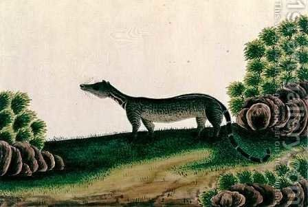 Moosang Gelong or Moosang Jibbet (Malay), from 'Drawings of Animals, Insects and Reptiles from Malacca', c.1805-18 by Anonymous Artist - Reproduction Oil Painting