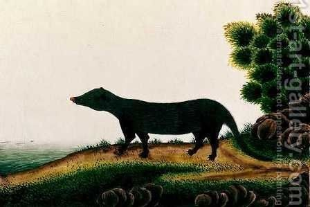 Furred mammal, from 'Drawings of Animals, Insects and Reptiles from Malacca', c.1805-18 by Anonymous Artist - Reproduction Oil Painting