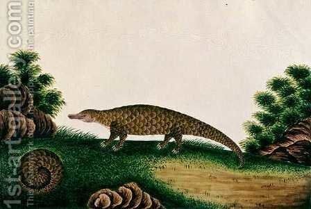 The Pangolin of Malacca, Tingieling (Malay) from 'Drawings of Animals, Insects and Reptiles from Malacca', c.1805-18 by Anonymous Artist - Reproduction Oil Painting