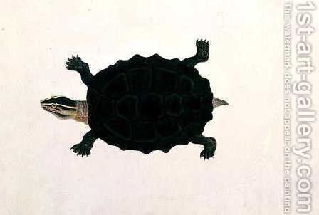 Land Tortoise, Koora Koora, from 'Drawings of Animals, Insects and Reptiles from Malacca', c.1805-18 by Anonymous Artist - Reproduction Oil Painting