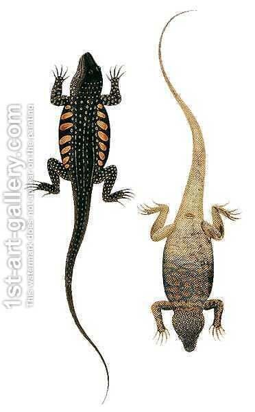 Reptiles, from 'Drawings of Animals, Insects and Reptiles from Malacca', c.1805-18 by Anonymous Artist - Reproduction Oil Painting