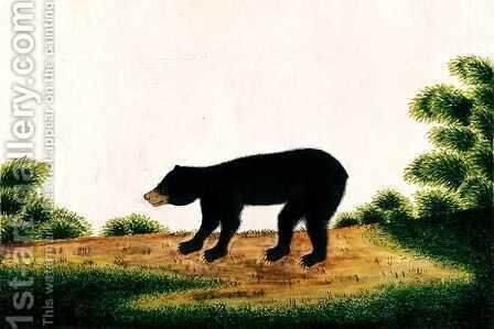 Bear, Broo-ang, from 'Drawings of Animals, Insects and Reptiles from Malacca', c.1805-18 by Anonymous Artist - Reproduction Oil Painting