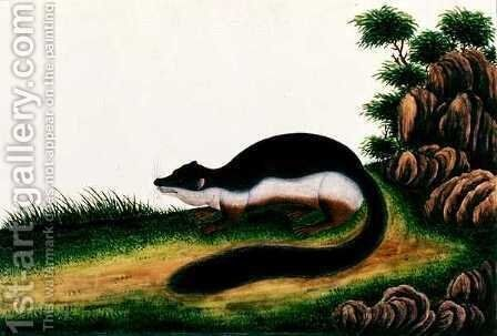 Toopay ching Kedwa Pedam, from 'Drawings of Animals, Insects and Reptiles from Malacca', c.1805-18 by Anonymous Artist - Reproduction Oil Painting