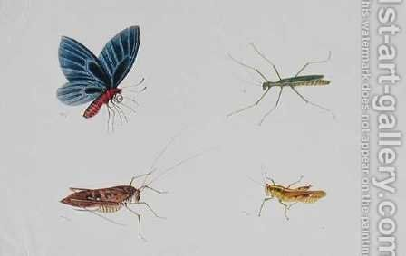Insects, from 'Drawings of Animals, Insects and Reptiles from Malacca', c.1805-18 by Anonymous Artist - Reproduction Oil Painting