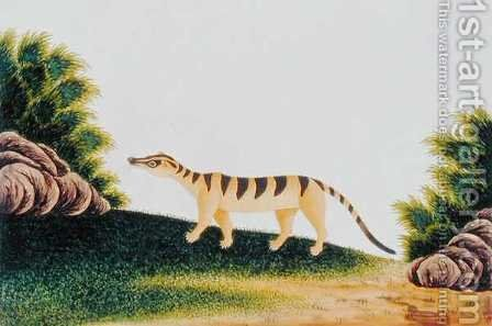 Furred Animal, from 'Drawings of Animals, insects and Reptiles from Malacca', c.1805-18 (2) by Anonymous Artist - Reproduction Oil Painting
