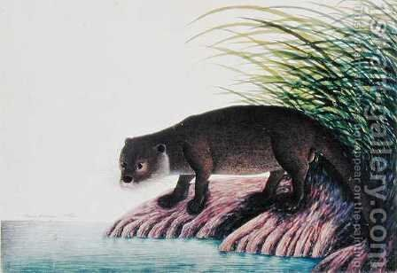 Otter, Brang-Brang, from 'Drawings of Animals, Insects and Reptiles from Malacca', c.1805-18 by Anonymous Artist - Reproduction Oil Painting