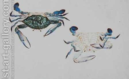 Ketam Rinyong, from 'Drawings of Animals, Insects and Reptiles from Malacca', c.1805-18 by Anonymous Artist - Reproduction Oil Painting