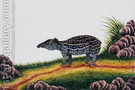 Young Tapir of Malacca, from 'Drawings of Animals, Insects and Reptiles from Malacca', c.1805-18 by Anonymous Artist - Reproduction Oil Painting