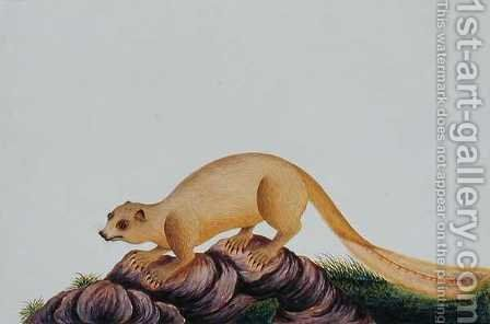 Squirrel, Toopay ching Krawa Pootey, from 'Drawings of Animals, Insects and Reptiles from Malacca', c.1805-18 by Anonymous Artist - Reproduction Oil Painting
