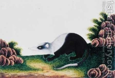 Ambang Boolan, from 'Drawings of Animals, Insects and Reptiles from Malacca', c.1805-18 by Anonymous Artist - Reproduction Oil Painting