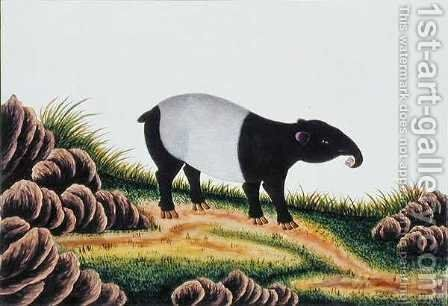 Tapir of Malacca, from 'Drawings of Animals, Insects and Reptiles from Malacca', c.1805-18 by Anonymous Artist - Reproduction Oil Painting