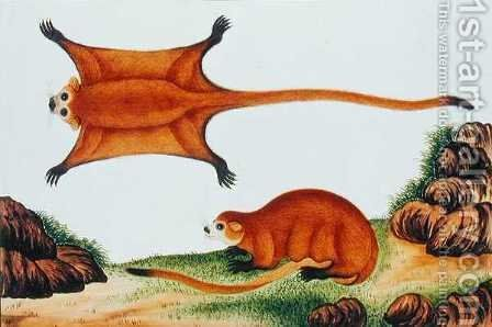 Flying Squirrel, Chin, Orawa, from 'Drawings of Animals, Insects and Reptiles from Malacca', c.1805-18 by Anonymous Artist - Reproduction Oil Painting