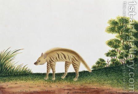 Hyena, from 'Drawings of Animals, Insects and Reptiles from Malacca', c.1805-18 by Anonymous Artist - Reproduction Oil Painting