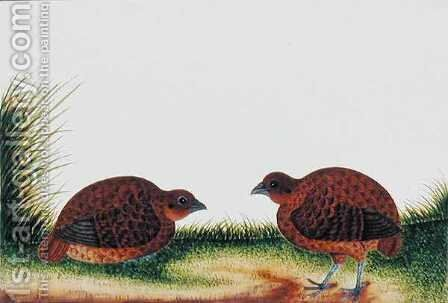Boorong Beitam, from 'Drawings of Birds from Malacca', c.1805-18 by Anonymous Artist - Reproduction Oil Painting