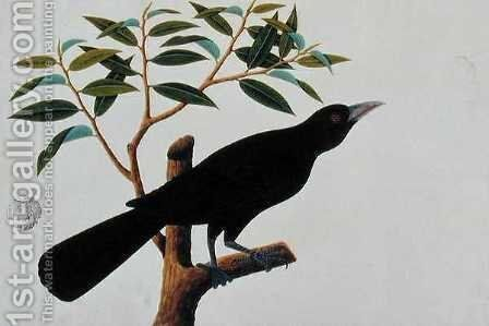 Black bird, from 'Drawings of Birds from Malacca', c.1805-18 (2) by Anonymous Artist - Reproduction Oil Painting