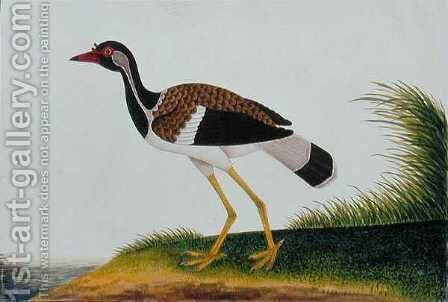 Tie Tieoo or Aian colan (Malay) from 'Drawings of Birds from Malacca', c.1805-18 by Anonymous Artist - Reproduction Oil Painting