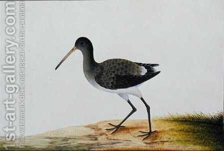 Gajie Gajie, from 'Drawings of Birds from Malacca', c.1805-18 by Anonymous Artist - Reproduction Oil Painting