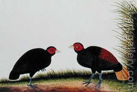 A Hen and Cock Pegur, from 'Drawings of Birds from Malacca', c.1805-18 by Anonymous Artist - Reproduction Oil Painting