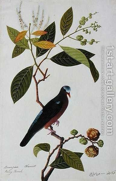 Brangan Chestnut, Pooney Tanah, from 'Drawings of Birds from Malacca', c.1805-18 by Anonymous Artist - Reproduction Oil Painting
