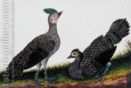 A Cock and Hen Kooaw Chirmin from 'Drawings of Birds from Malacca', c.1805-18 by Anonymous Artist - Reproduction Oil Painting