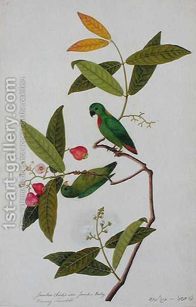 Jamboo Chielie also Jamboo Bertay Boorong Serindik, from 'Drawings of Birds from Malacca', c.1805-18 by Anonymous Artist - Reproduction Oil Painting