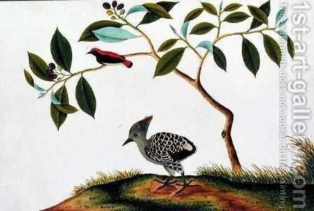 Sepah Pootrie, from 'Drawings of Birds from Malacca', c.1805-18 by Anonymous Artist - Reproduction Oil Painting
