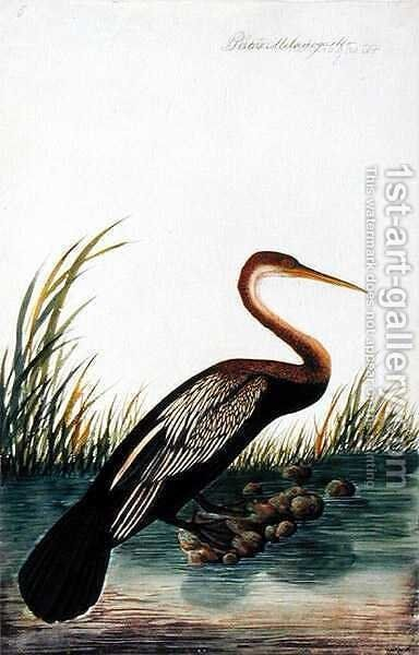 Boorong Maudang, Plotus Melangaster, from 'Drawings of Birds from Malacca', c.1805-18 by Anonymous Artist - Reproduction Oil Painting