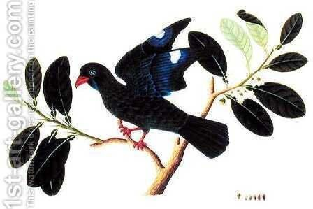 Boorong Tanou, from 'Drawings of Birds from Malacca', c.1805-18 by Anonymous Artist - Reproduction Oil Painting