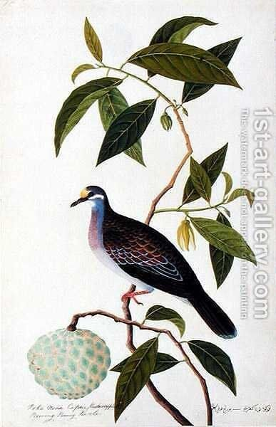 Custard Apple, Poke Nona Caprie with Boorong Pooney Sieole, from 'Drawings of Birds from Malacca', c.1805-18 by Anonymous Artist - Reproduction Oil Painting