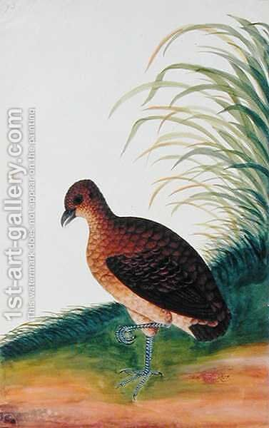 Exotic Bird, from 'Drawings of Birds from Malacca', c.1805-18 (6) by Anonymous Artist - Reproduction Oil Painting