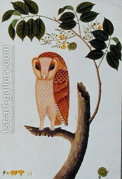 Owl, Boorong antoo, from 'Drawings of Birds from Malacca', c.1805-18 by Anonymous Artist - Reproduction Oil Painting