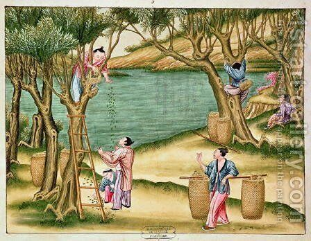 Collecting mulberries, from a book on the silk industry by Anonymous Artist - Reproduction Oil Painting
