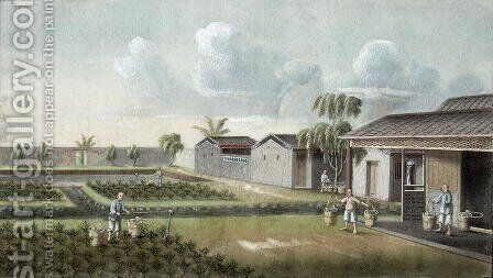Watering tea plants by Anonymous Artist - Reproduction Oil Painting