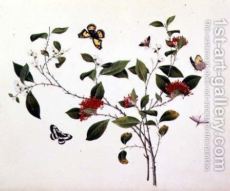 Plant Study with Butterflies and Insects, c.1800 by Anonymous Artist - Reproduction Oil Painting