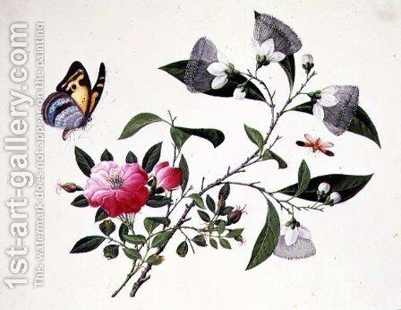 Flower Study and Insects (2) by Anonymous Artist - Reproduction Oil Painting