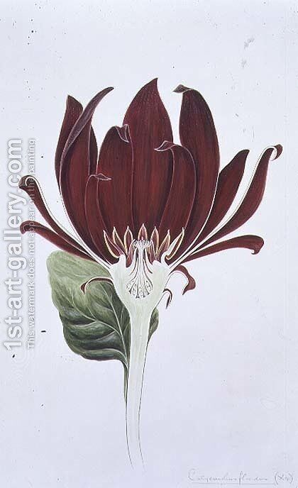 Drawing 3-1 Calycanthus floridus (Carolina Allspice) 1905 by Arthur Henry Church - Reproduction Oil Painting