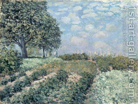 The Market Gardens, 1874 by Alfred Sisley - Reproduction Oil Painting
