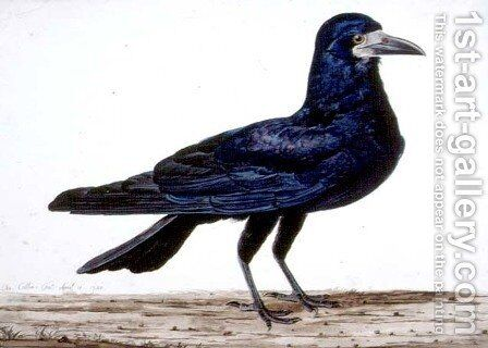 A Rook by Charles Collins - Reproduction Oil Painting