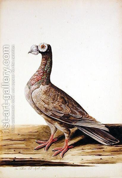 A Woodgrouse, Hen, 1741 by Charles Collins - Reproduction Oil Painting