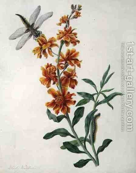 Erysium Cheiri with Dragonfly and Caterpillar by Matilda Conyers - Reproduction Oil Painting