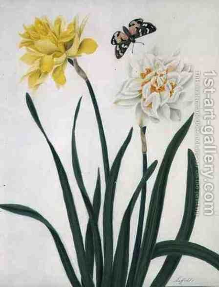 Narcissi and Butterfly by Matilda Conyers - Reproduction Oil Painting