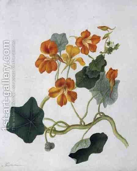 Tropaeolum by Matilda Conyers - Reproduction Oil Painting