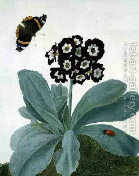 Primula Auricula with Butterfly and Beetle by Matilda Conyers - Reproduction Oil Painting