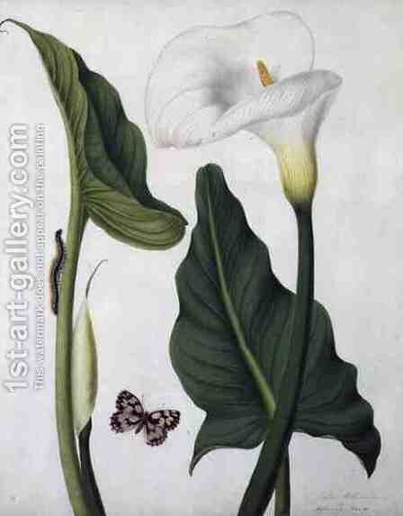 Calla Aethiopica with Butterfly and Caterpillar by Matilda Conyers - Reproduction Oil Painting