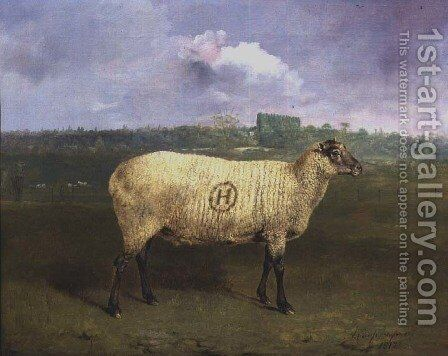 A Prize Ewe with monogram H belonging to Mr J.A. Houblon  Hallingbury Place  Essex  1812 by Abraham Cooper - Reproduction Oil Painting
